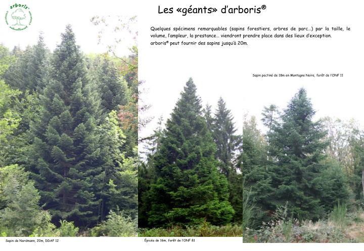 Quelques spécimens remarquables (sapins forestiers, arbres de parc…) par la taille, le volume, l'ampleur, la prestance… viendront prendre place dans des lieux d'exception.