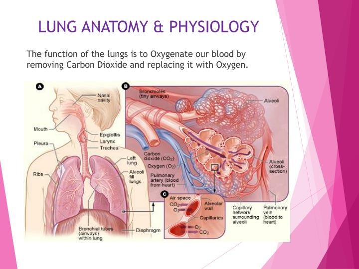 LUNG ANATOMY & PHYSIOLOGY