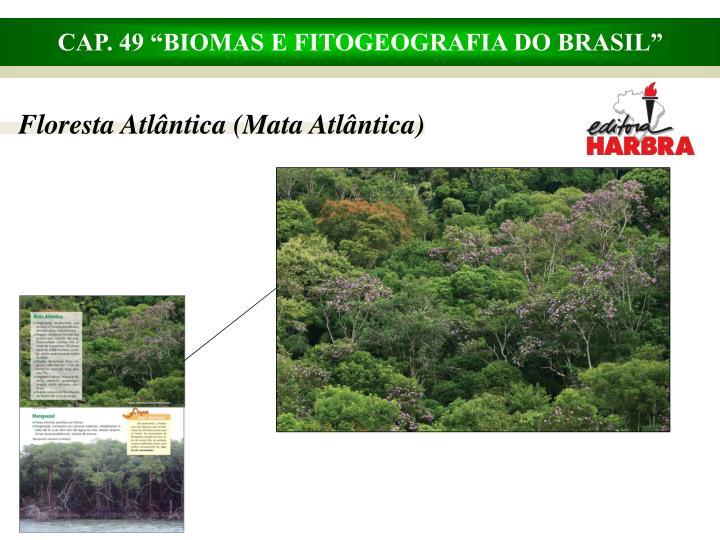 Floresta Atlântica (Mata Atlântica)