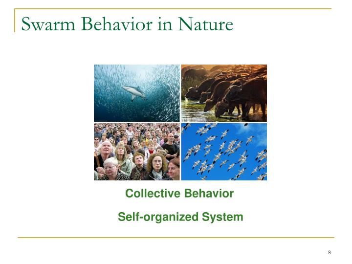 Swarm Behavior in Nature