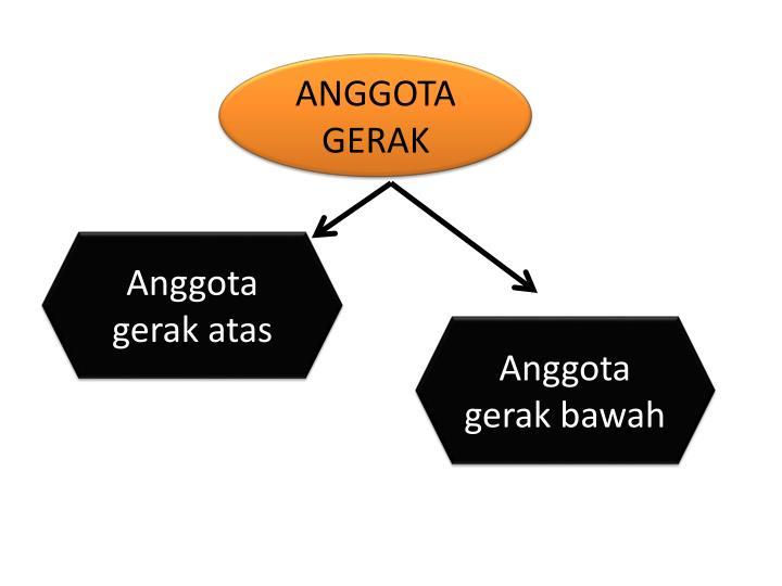 ANGGOTA GERAK