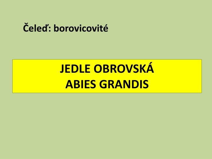 JEDLE OBROVSKÁ
