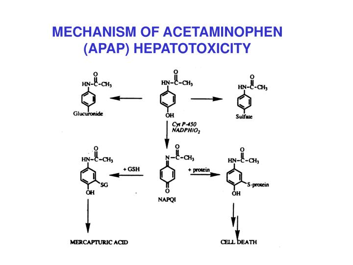 MECHANISM OF ACETAMINOPHEN (APAP) HEPATOTOXICITY