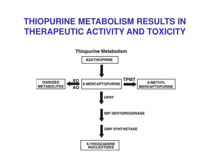 THIOPURINE METABOLISM RESULTS IN THERAPEUTIC ACTIVITY AND TOXICITY