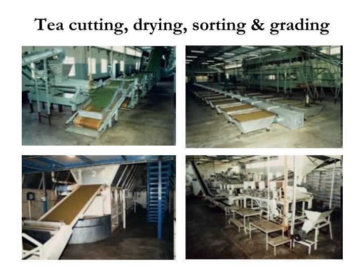 Tea cutting, drying, sorting & grading