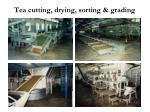 tea cutting drying sorting grading