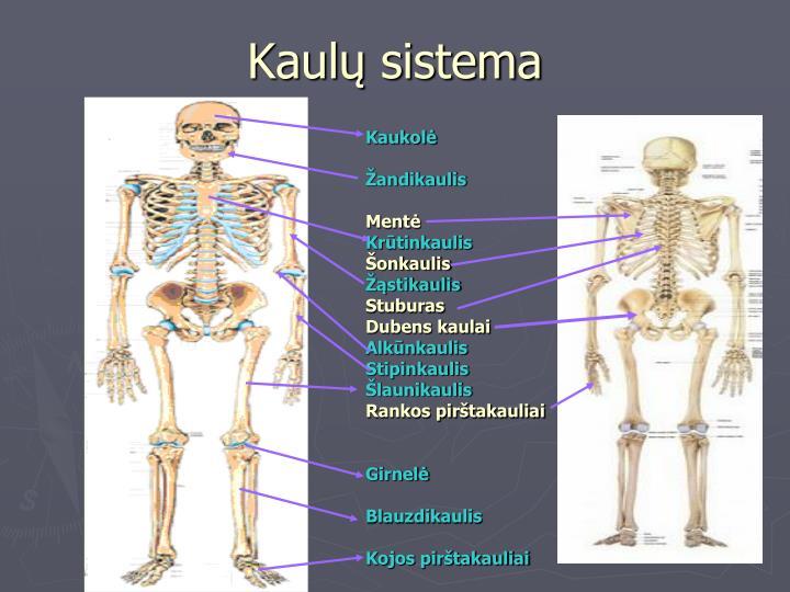 Kaulų sistema