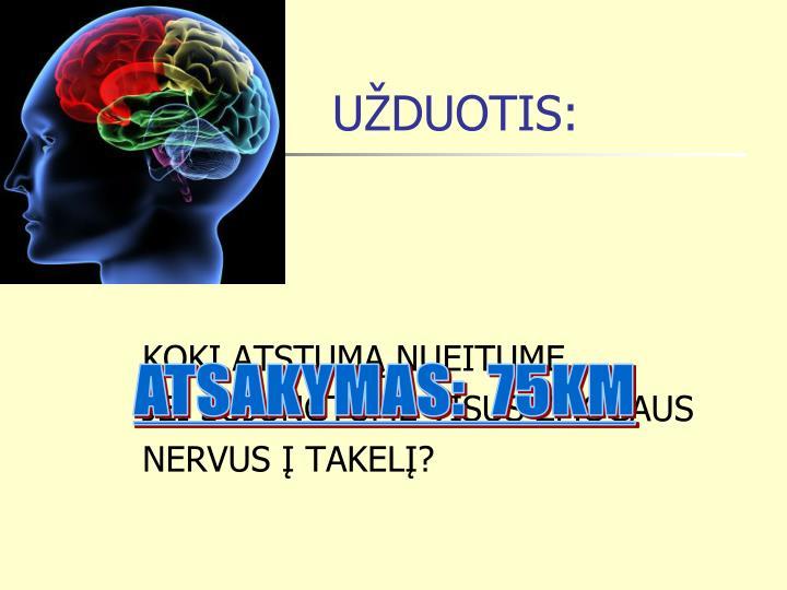 UŽDUOTIS: