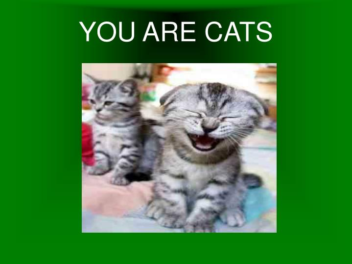 YOU ARE CATS