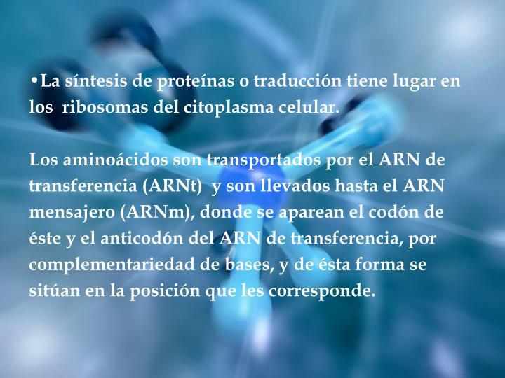 La síntesis de proteínas o traducción tiene lugar en