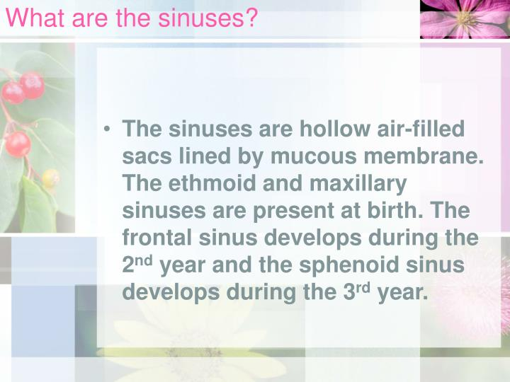 What are the sinuses?
