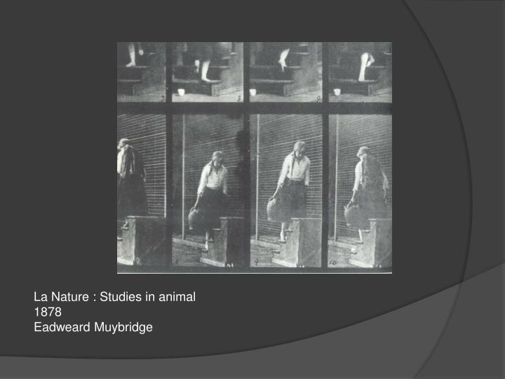 La Nature : Studies in animal