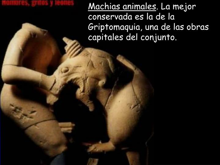 Machias animales