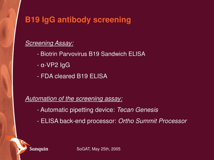 B19 IgG antibody screening