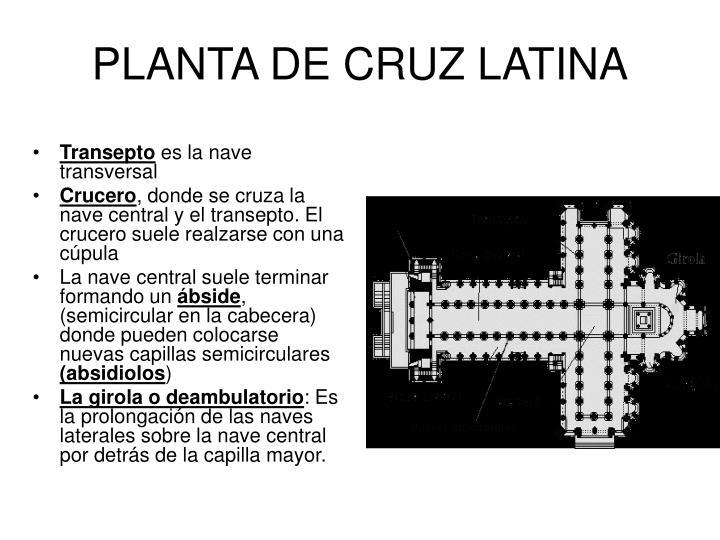 PLANTA DE CRUZ LATINA