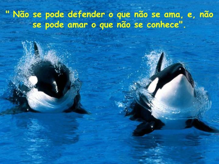 """"""" Não se pode defender o que não se ama, e, não se pode amar o que não seconhece""""."""