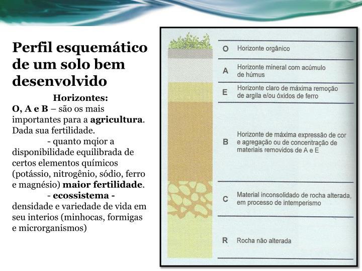 Perfil esquemático de um solo bem desenvolvido