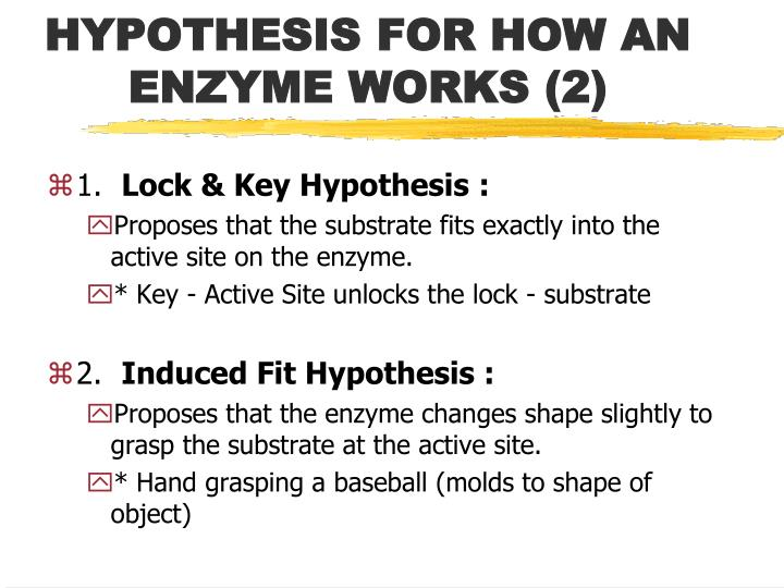 HYPOTHESIS FOR HOW AN ENZYME WORKS (2)