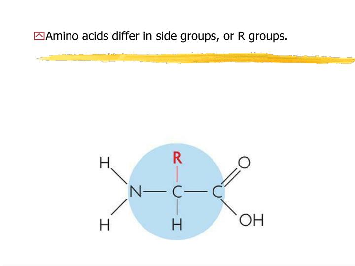 Amino acids differ in side groups, or R groups.