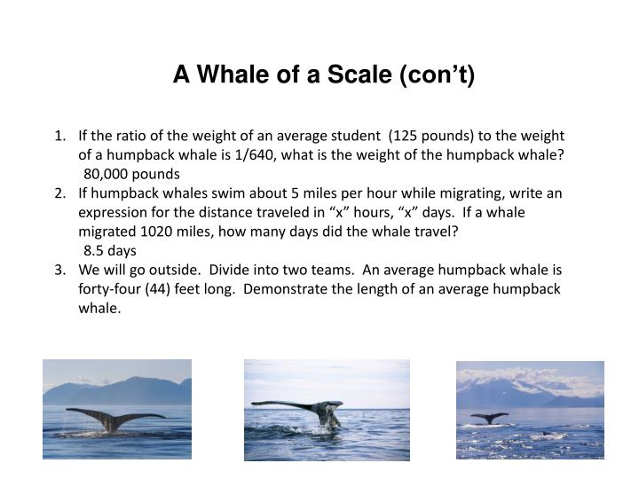 A Whale of a Scale (