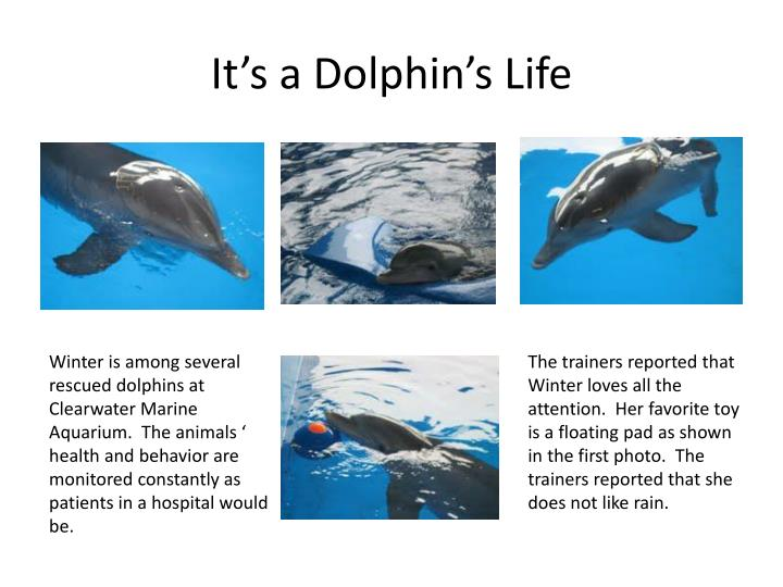 It's a Dolphin's Life