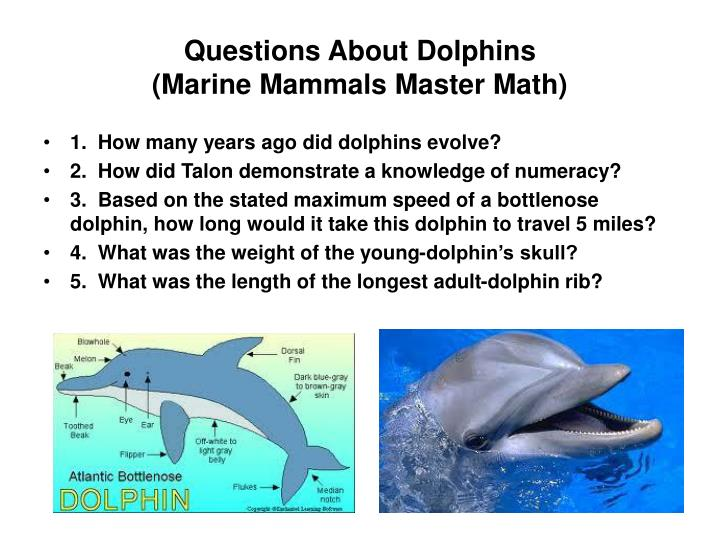 Questions About Dolphins