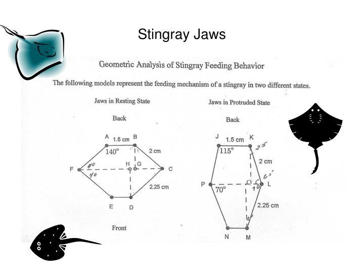 Stingray Jaws
