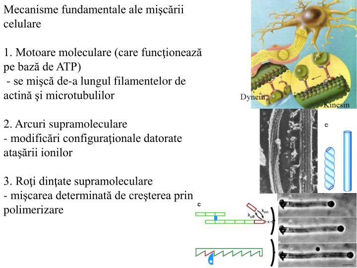 Mecanisme fundamentale ale mişcării celulare