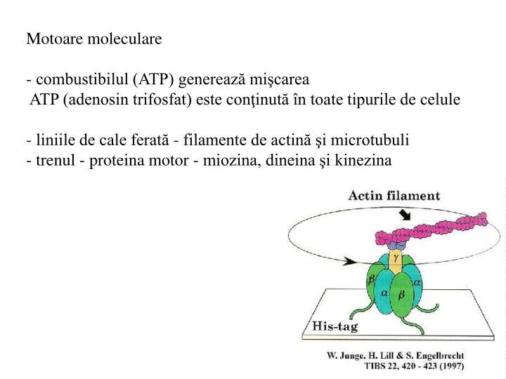 Motoare moleculare