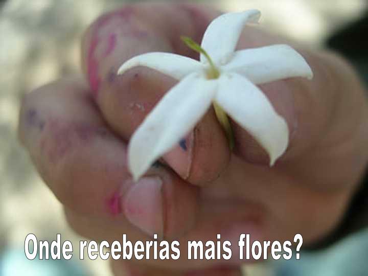 Onde receberias mais flores?