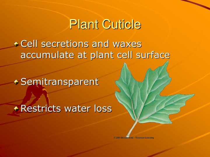 Plant Cuticle