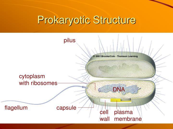 Prokaryotic Structure