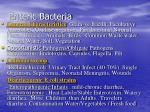enteric bacteria1