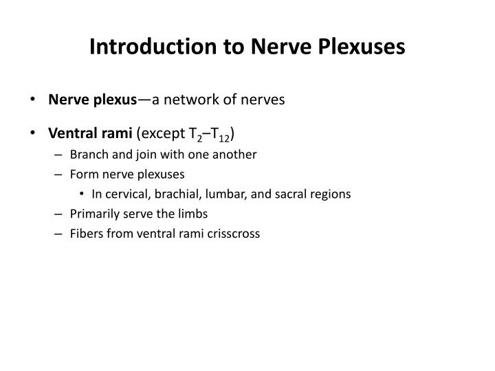 Introduction to Nerve Plexuses