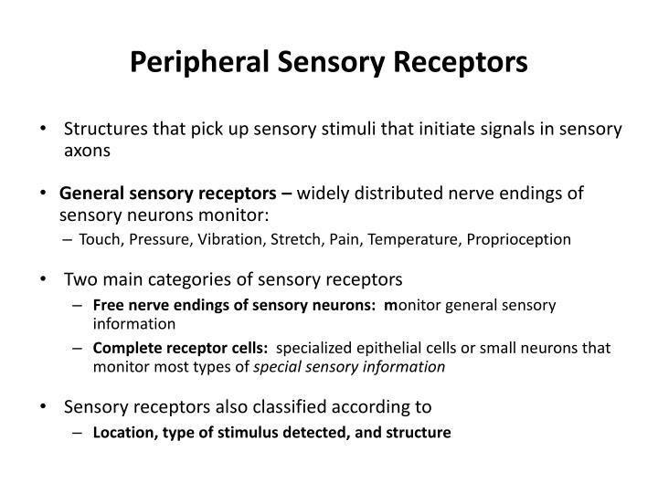 Peripheral Sensory Receptors