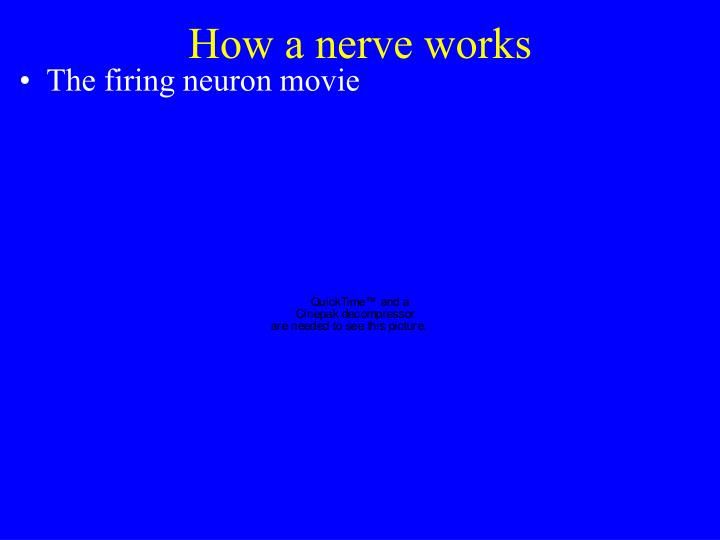 How a nerve works