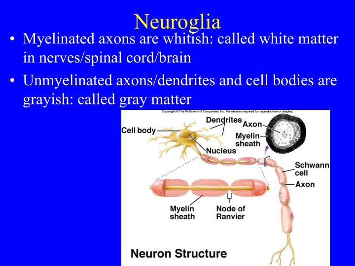 Neuroglia