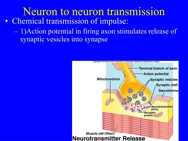 Neuron to neuron transmission