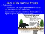 parts of the nervous system13