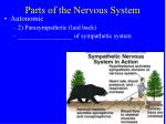 parts of the nervous system14
