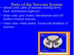 parts of the nervous system5