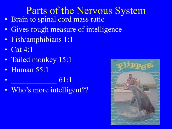 Parts of the Nervous System