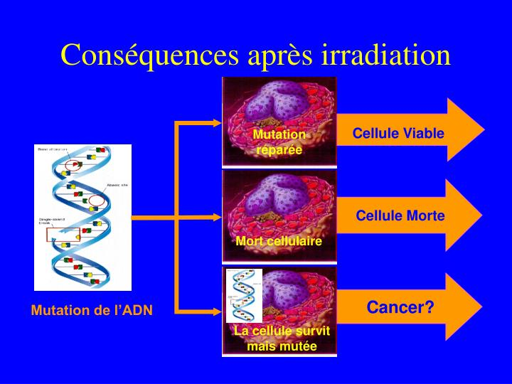 Cons quences apr s irradiation