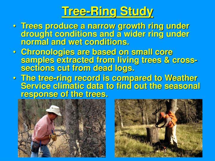 Tree-Ring Study