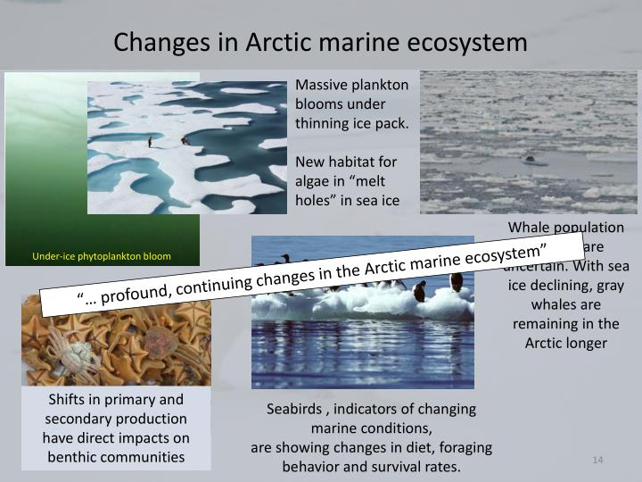 Changes in Arctic marine ecosystem