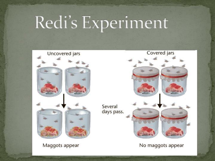 Redi's