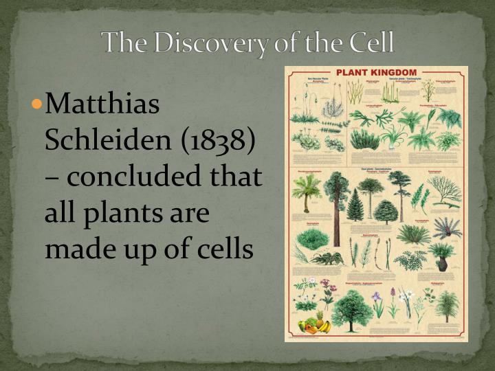 Matthias Schleiden (1838) – concluded that all plants are made up of cells