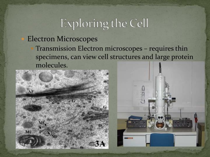 Electron Microscopes