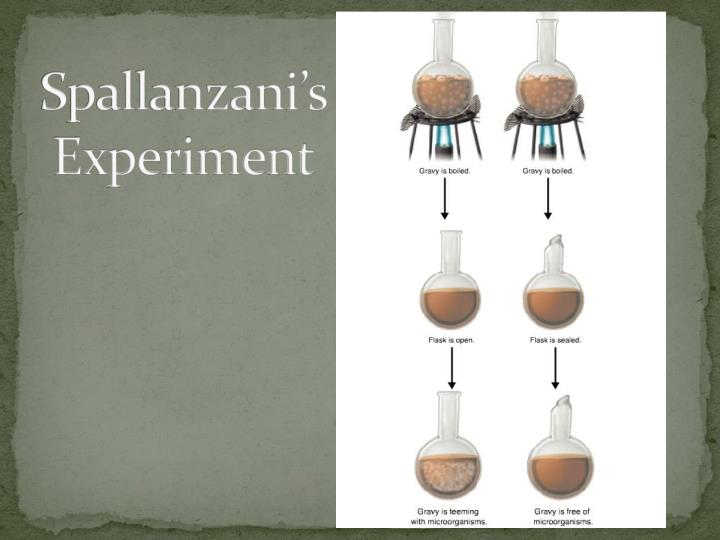 Spallanzani's