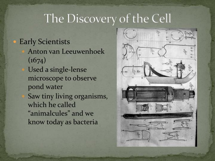 The Discovery of the Cell